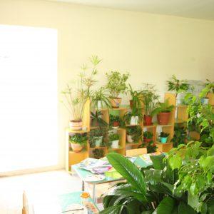 Зеленый класс 1